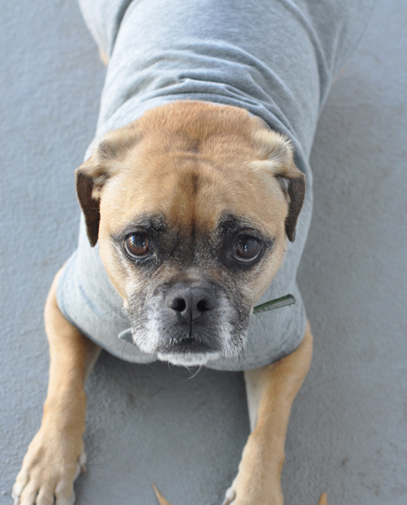 Super cute and soft eco-friendly dog shirt made from recycled bottles and reclaimed cotton! Trendy Little Sweethearts