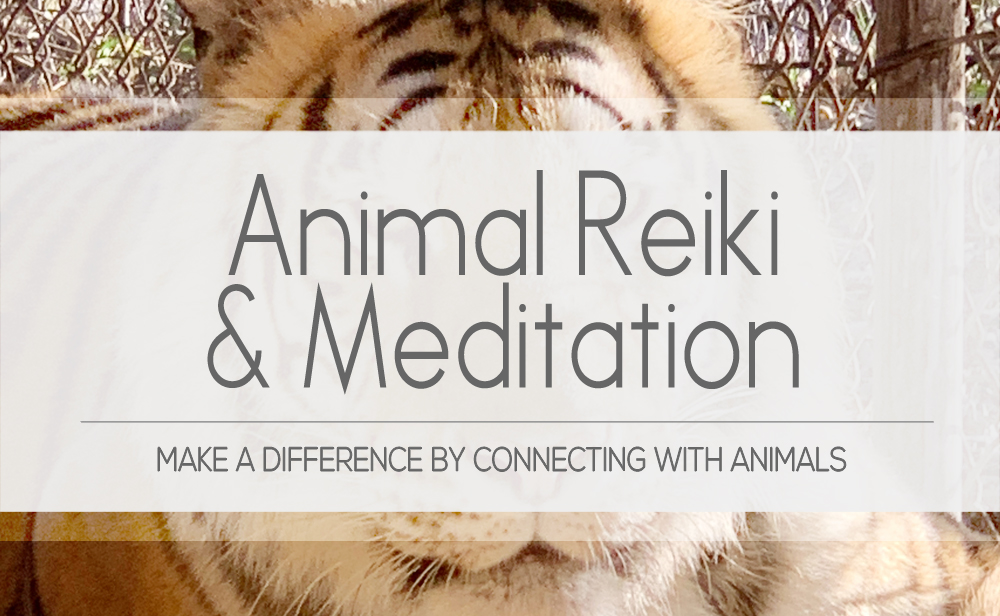 Animal reiki master helps you make a difference with animal connection