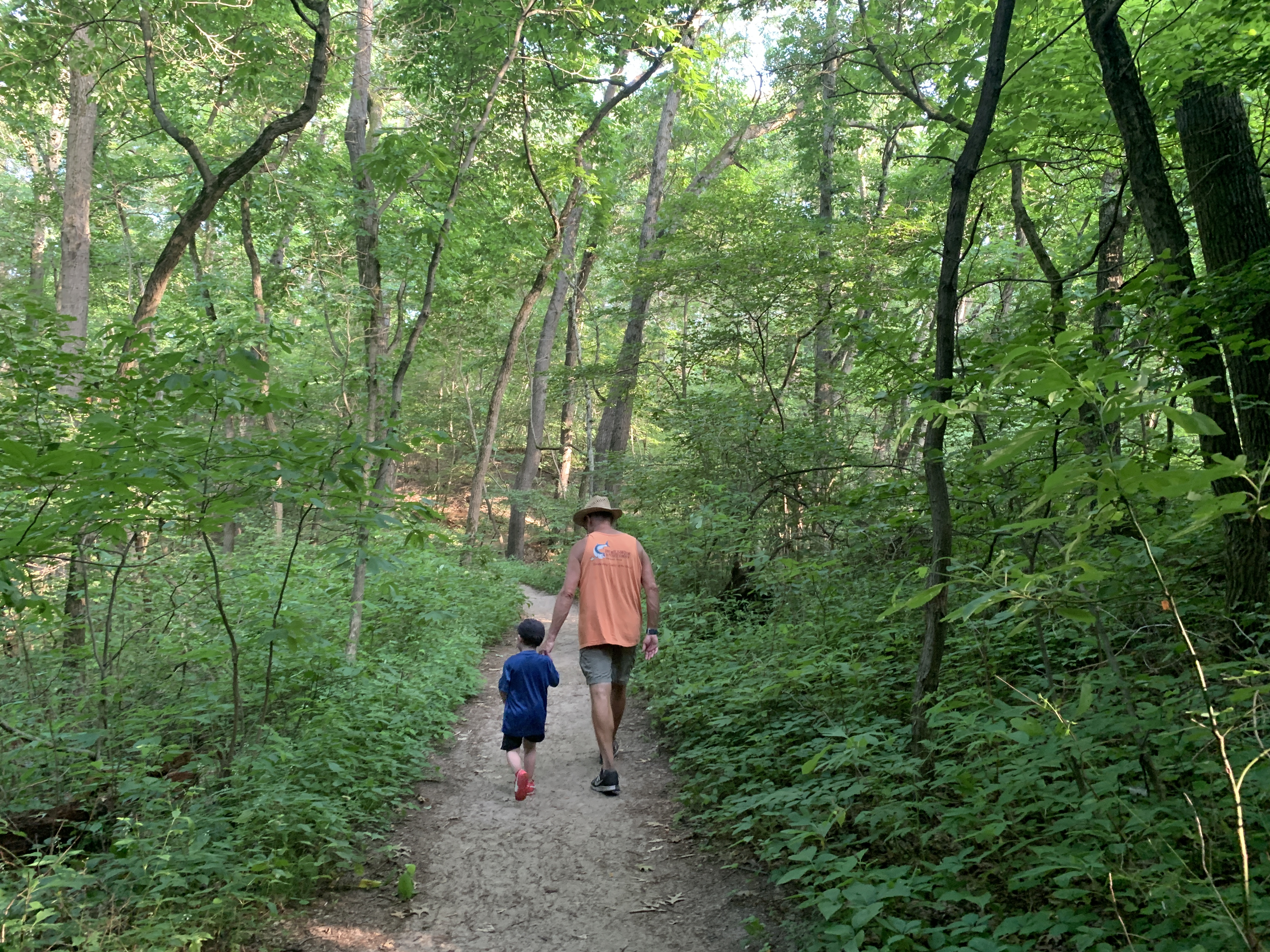 Hiking through the forest at Indiana Dunes National Park