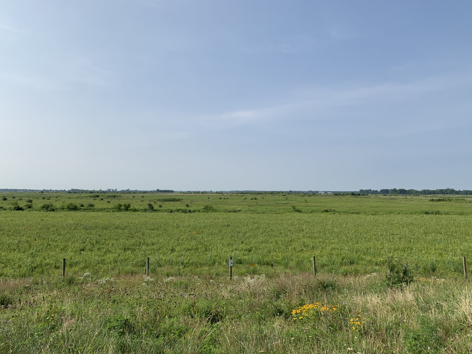 Looking for bison at Kankakee Sands Nature Conservancy Indiana