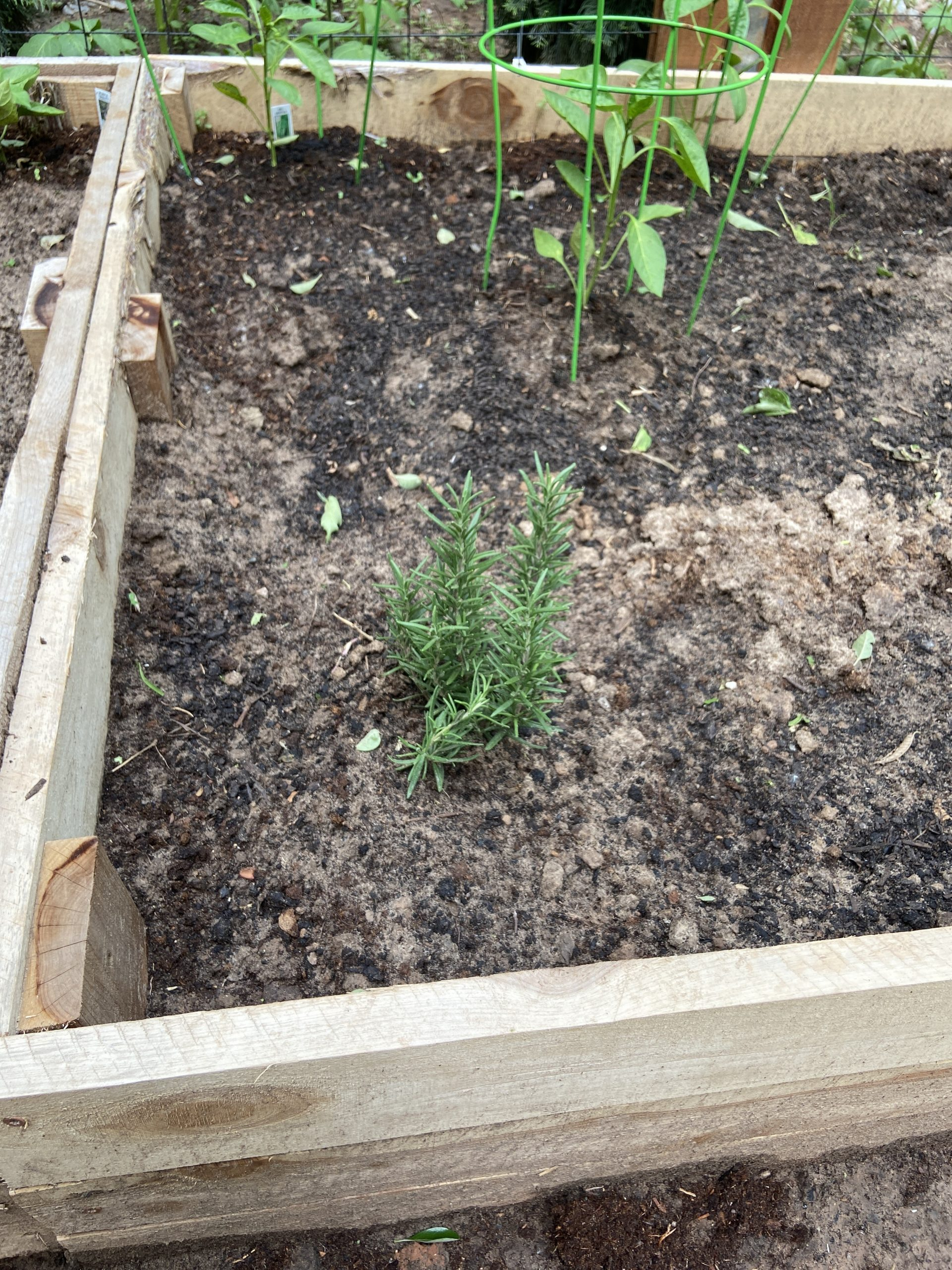 How to build an easy raised garden bed with Brooke Freeman of Natural Freedom Farm | For Animals For Earth