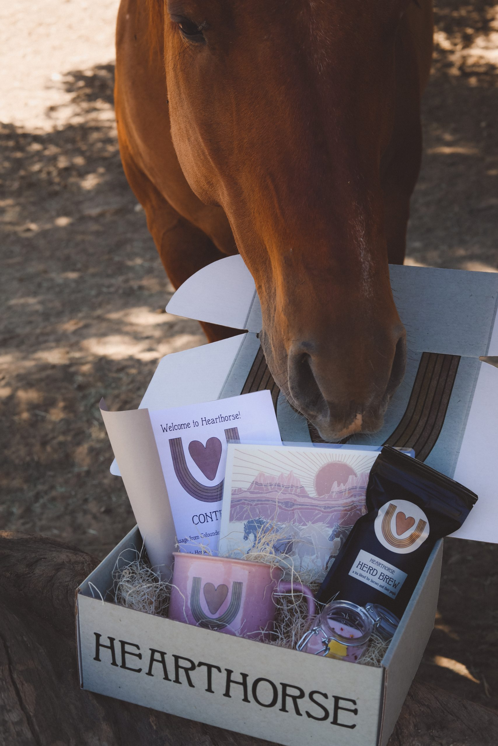 Charlotte can talk horse. Seriously! She is an animal communicator and medium who spends a lot of time talking to horses.In episode 14, she tells me all about how her life shaped the way she advocates for horses today through her business and online community, Hearthorse. Available in episode 14 of the For Animals For Earth Podcast