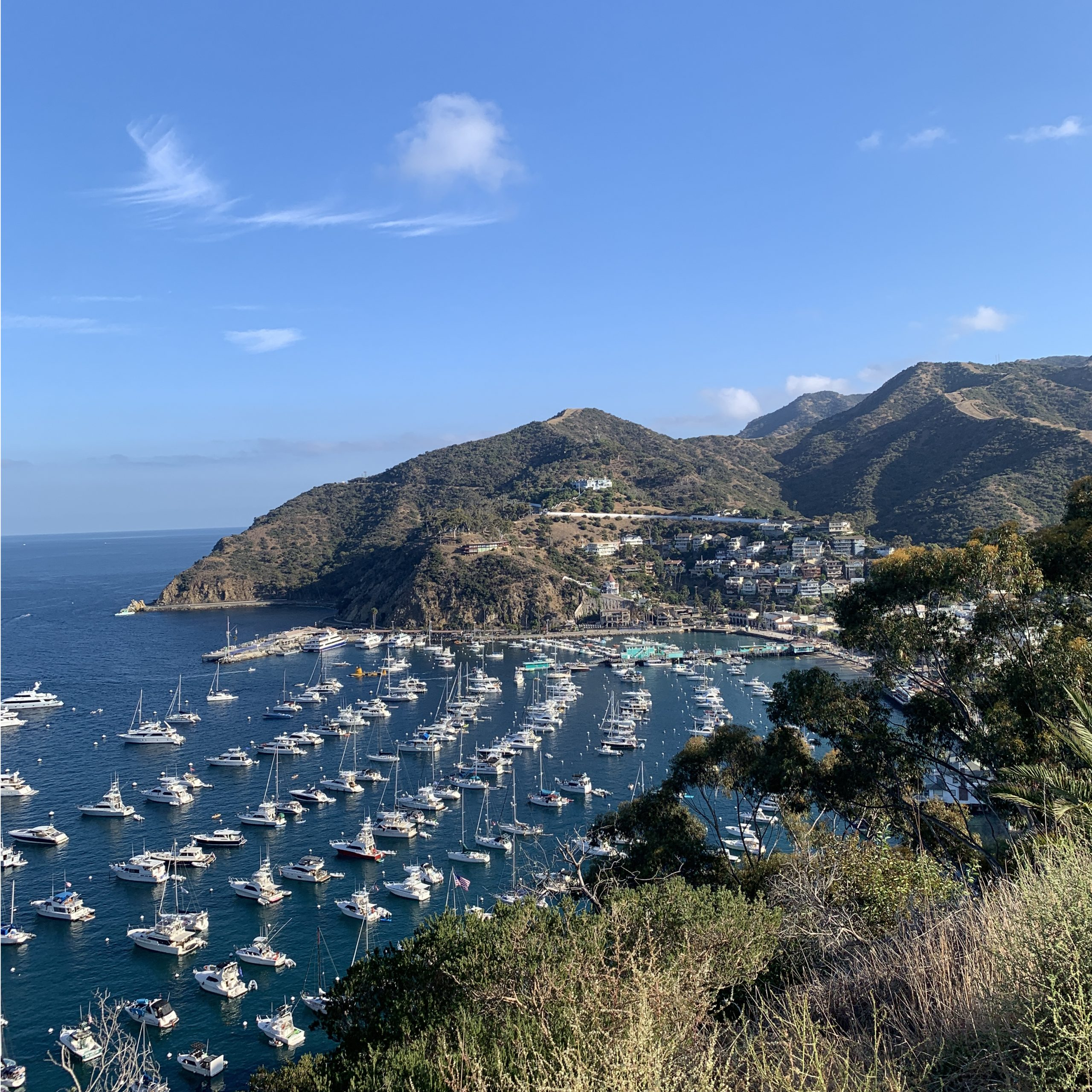 Island of Catalina Conservancy does an amazing tour of the undeveloped parts of the island. We learned about the endemic and invasive species, and the work they're doing to protect the island. | For Animals For Earth