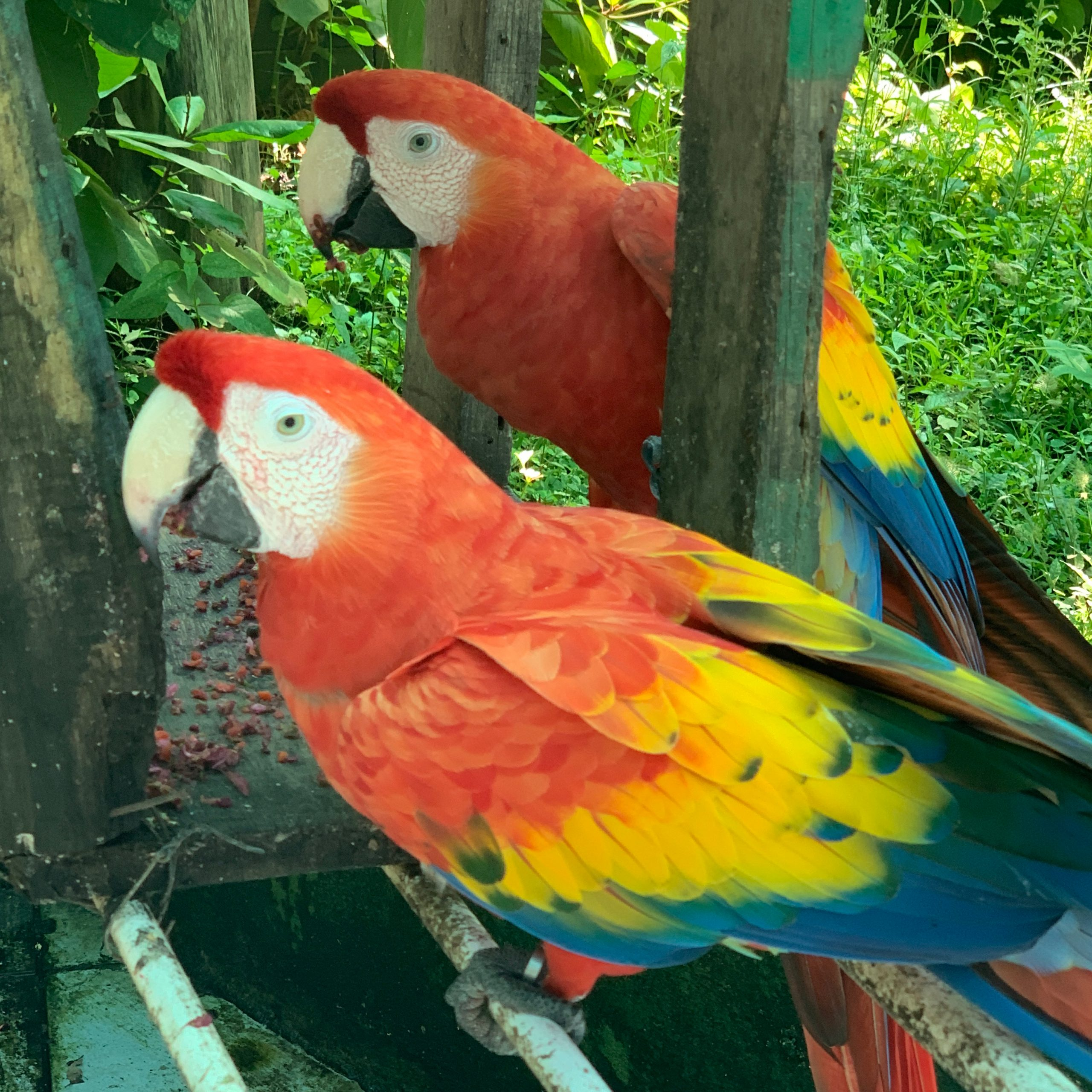 Ethically see animals in Costa Rica at Rescue Center Costa Rica | For Animals For Earth