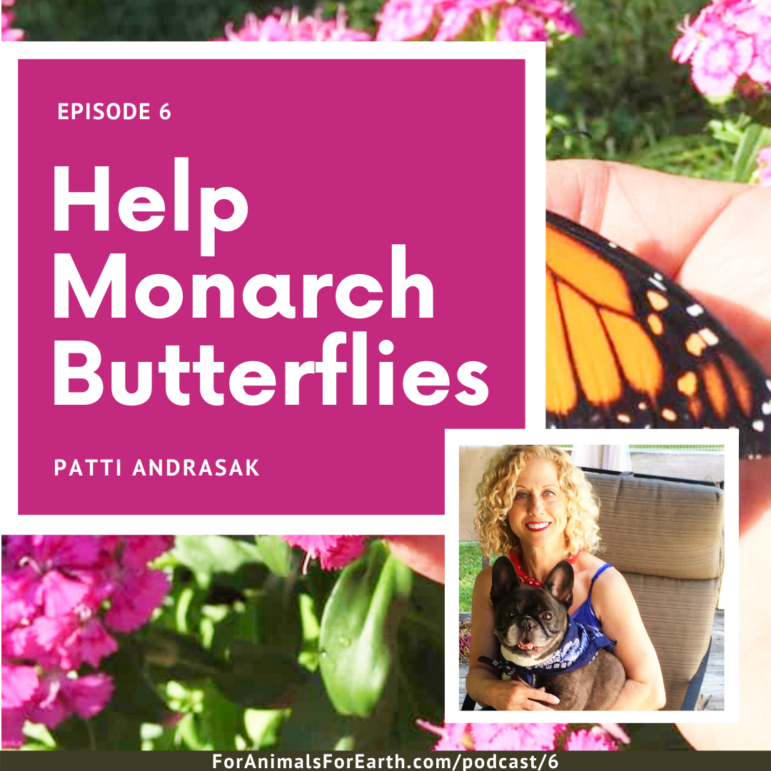 Patti Andrasak from Inner Peace Reiki teaches us how to help monarch butterflies on the For Animals For Earth Podcast.