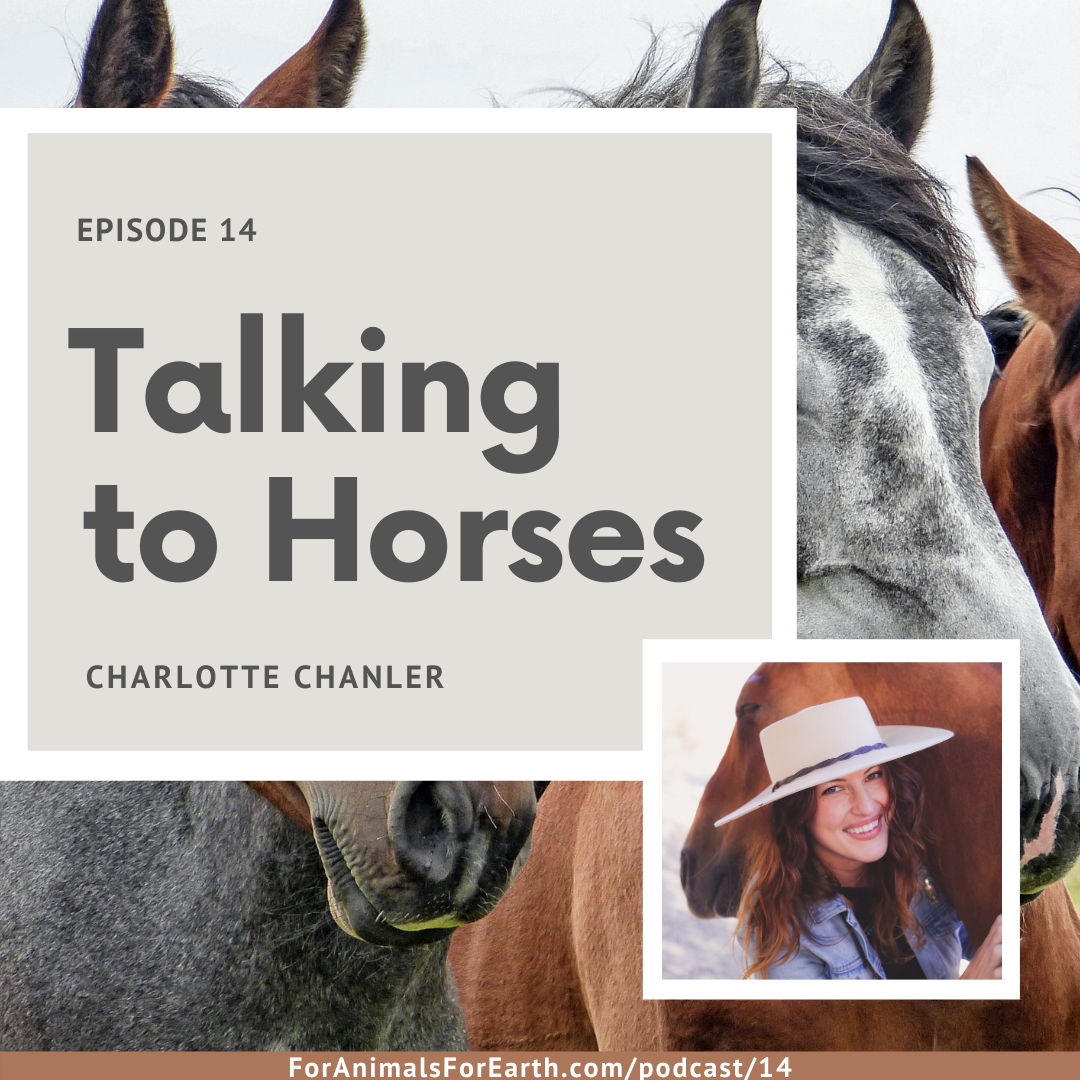 Charlotte can talk horse.  Seriously!  She is an animal communicator and medium who spends a lot of time talking to horses. In episode 14, she tells me all about how her life shaped the way she advocates for horses today through her business and online community, Hearthorse. Available in episode 14 of the For Animals For Earth Podcast