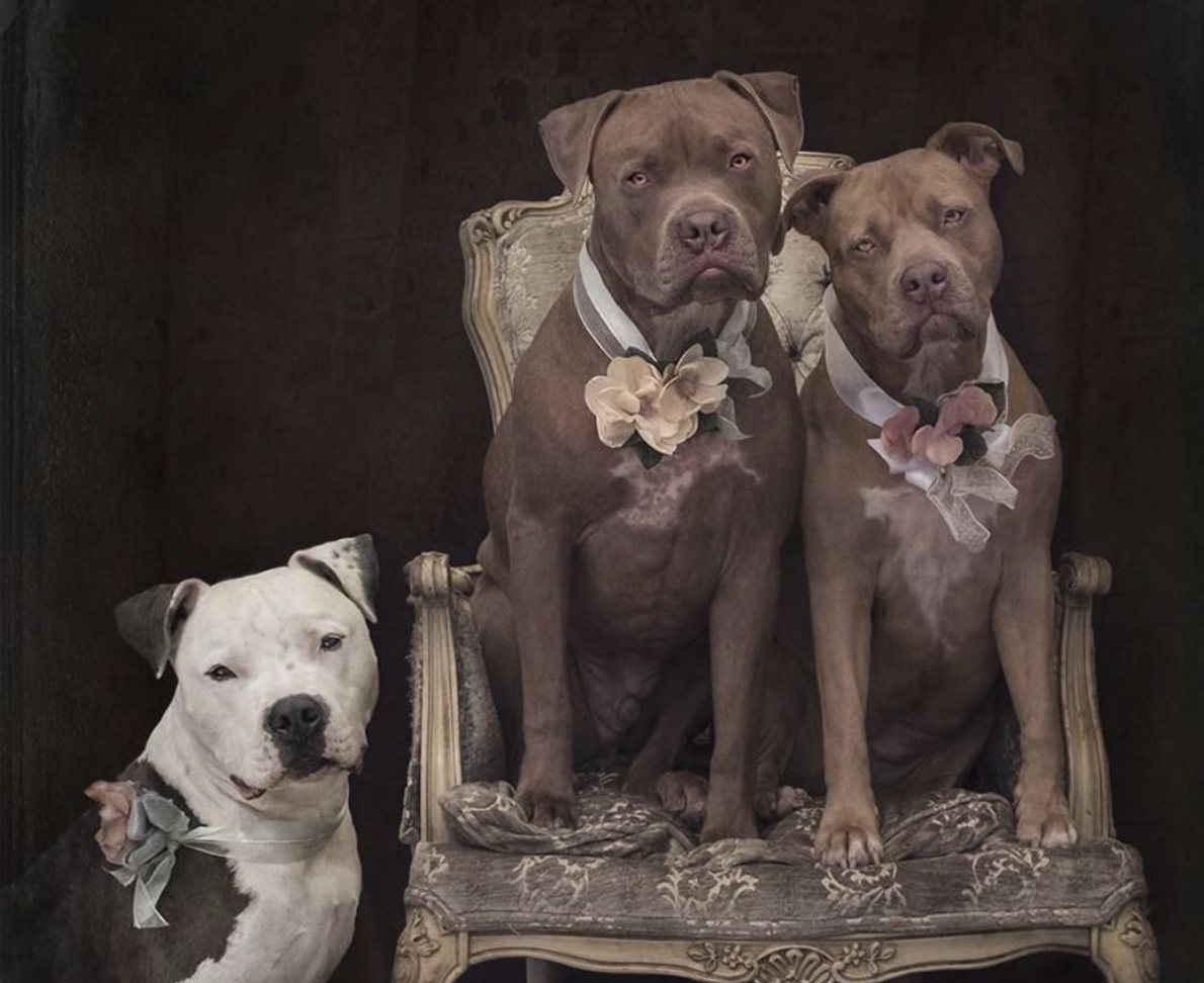 """Throughout our conversation, pit bull advocate, Laura Vena, pushes us to stop thinking of pit bulls as a """"breed"""", but to think of each one as a truly unique individual. Episode 27 of the For Animals For Earth Podcast"""