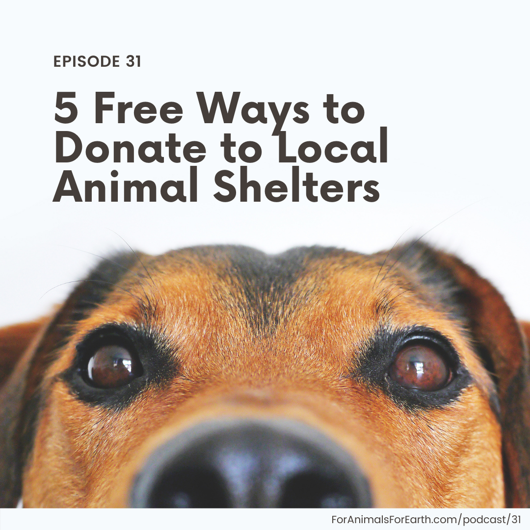 5 Ways to Donate to Local Animal Shelters, Without Spending a Penny