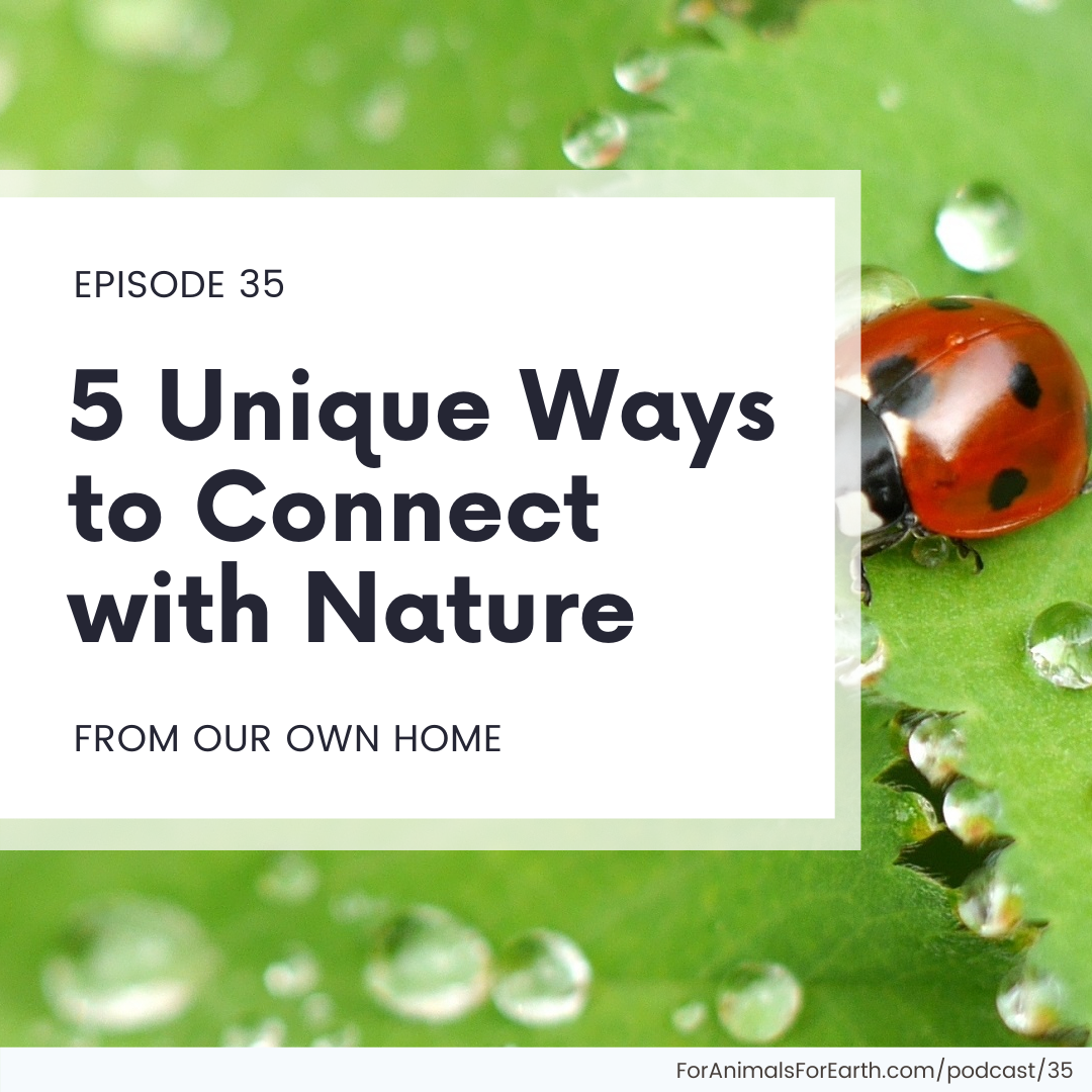 5 Unique ways to connect with nature from our own home | For Animals For Earth podcast, episode 35