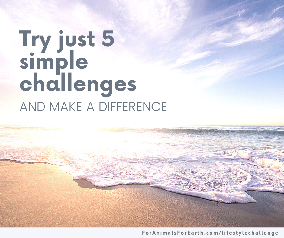 Free 5 step conscious lifestyle challenge. Join us for 5 days of simple ideas and make a difference for animals and the earth. | For Animals. For Earth.