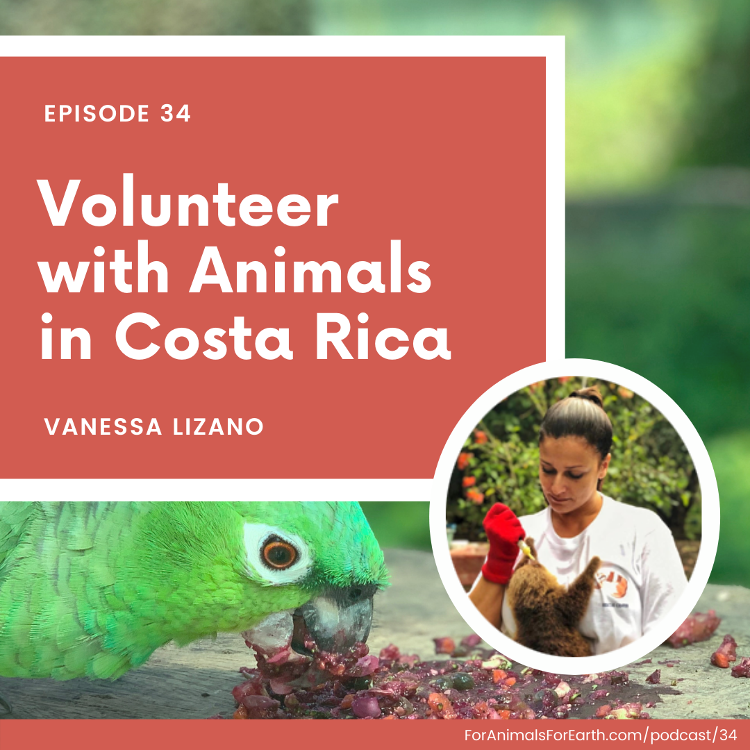 Volunteer with animals in Costa Rica. A chat with Vanessa Lizano, founder of Rescue Center Costa Rica in Alajuela. Episode 34 of the For Animals For Earth Podcast