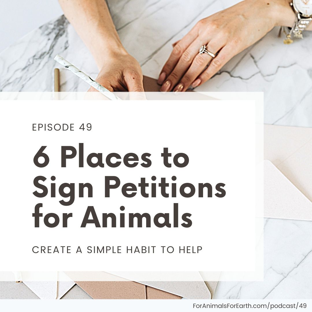 Looking for easy places to sign petitions for animals? Try this roundup of my top 6 animal welfare and conservation petition aggregators. Episode 49, For Animals. For Earth. podcast