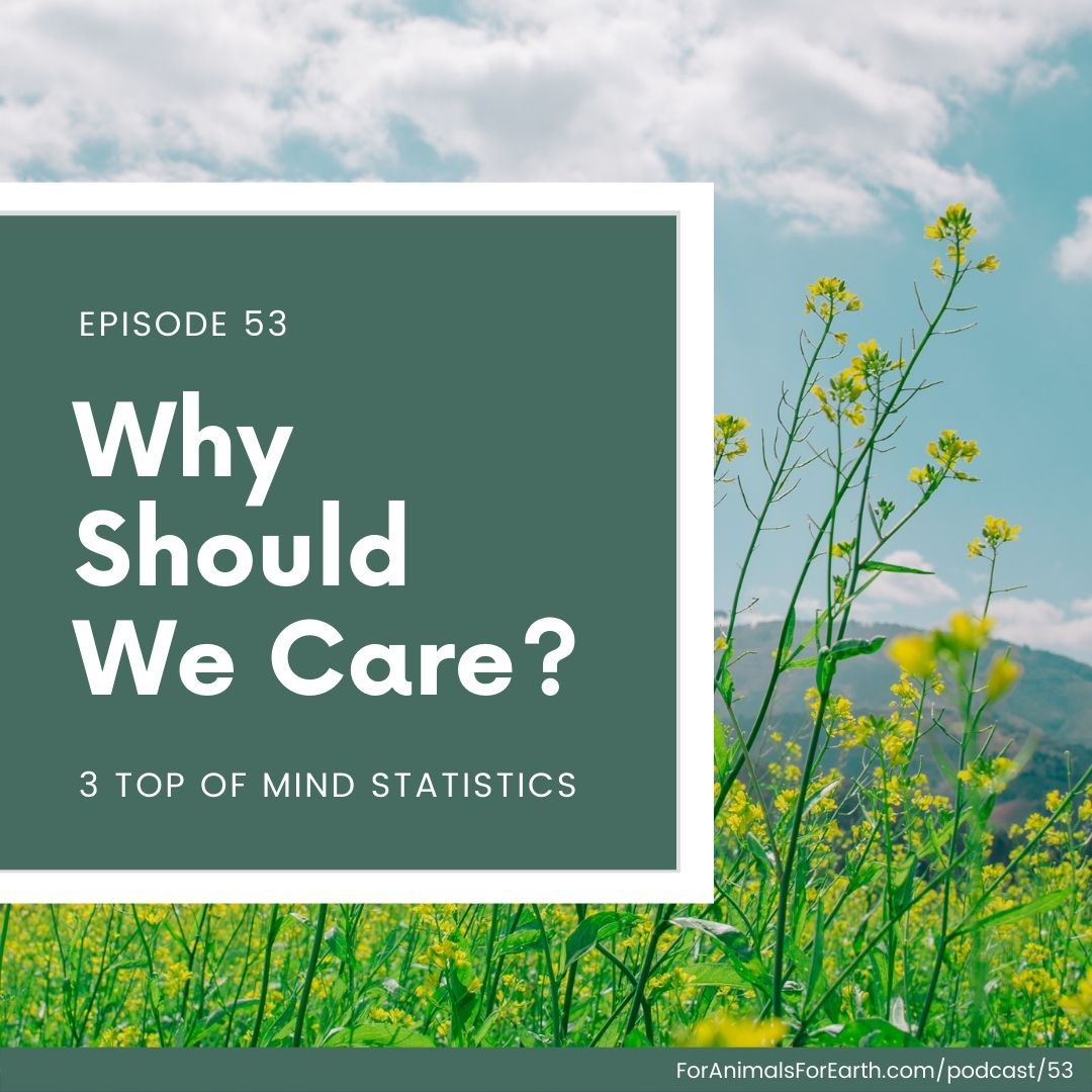 Why should we care about the environment? Three statistics to keep top of mind for conversation.