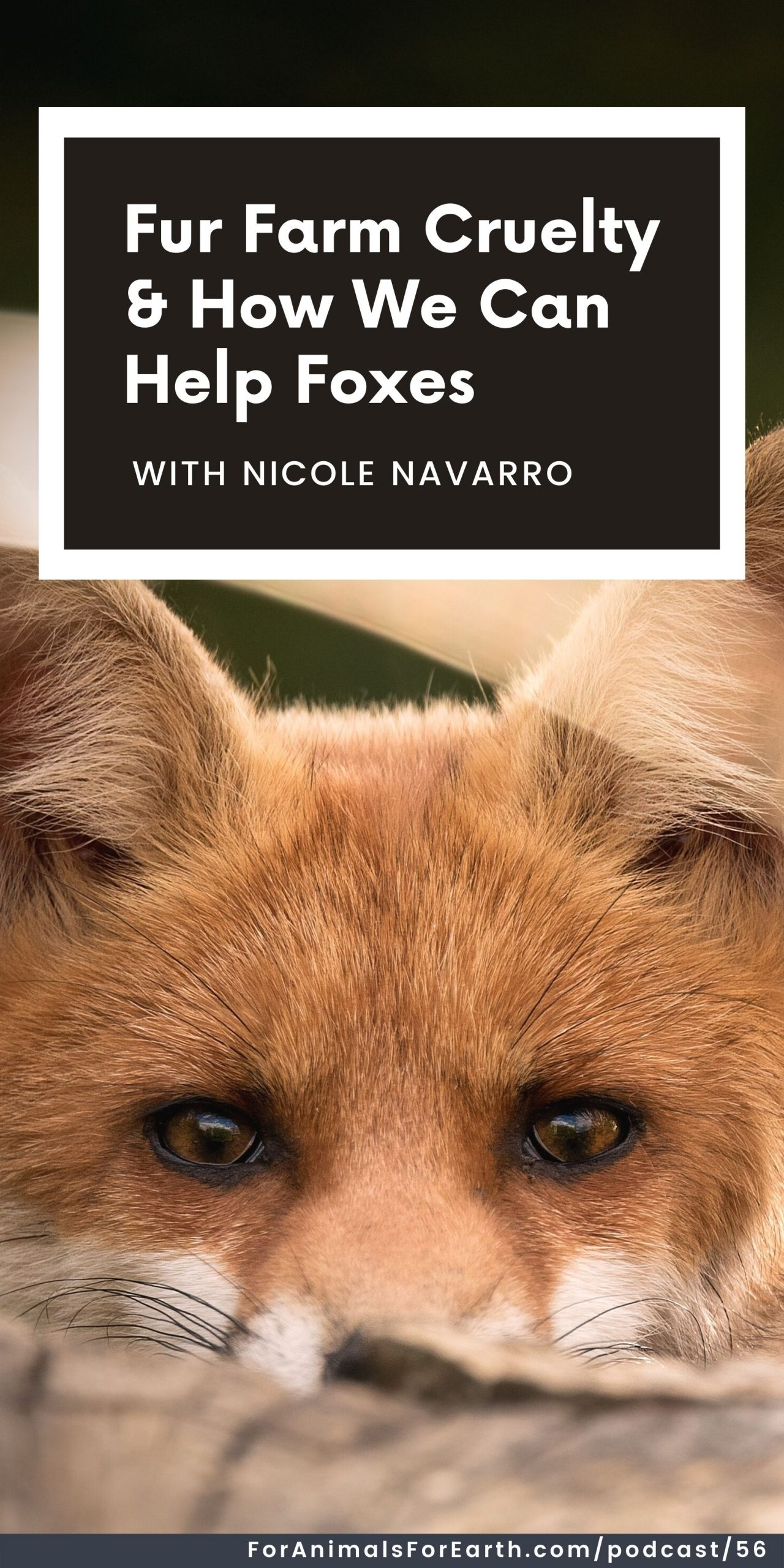 Did you know that fur farms are not only operating, but are alive and thriving in the United States? Nicole from Pawsitive Beginnings saves foxes from fur farms and joined me on the For Animals. For Earth. show to tell us how we can help.